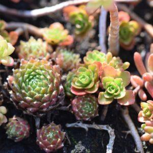 les avantages du toit vegetal